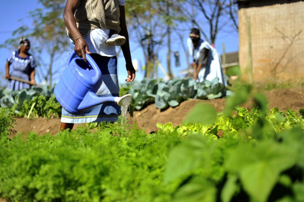 Food Gardens And Small Scale Farmers Hold Key To Food System